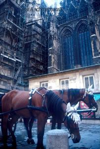 Cattedrale St Estefan