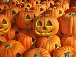 Zucche - Halloween