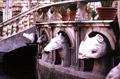 Fontana Pretoria: particolare di alcune sculture di teste di animali
