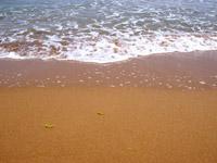 riserva orientata della foce del fiume belice