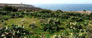 Riserva Naturale Orientata Capo Rama
